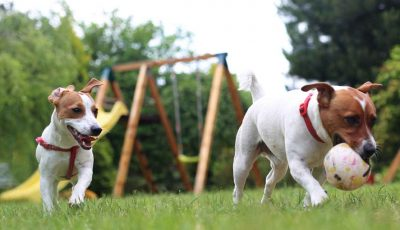 honden spelen in omheinde tuin
